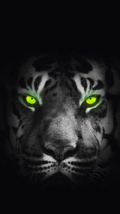 Tiger Eyes iPhone Wallpaper