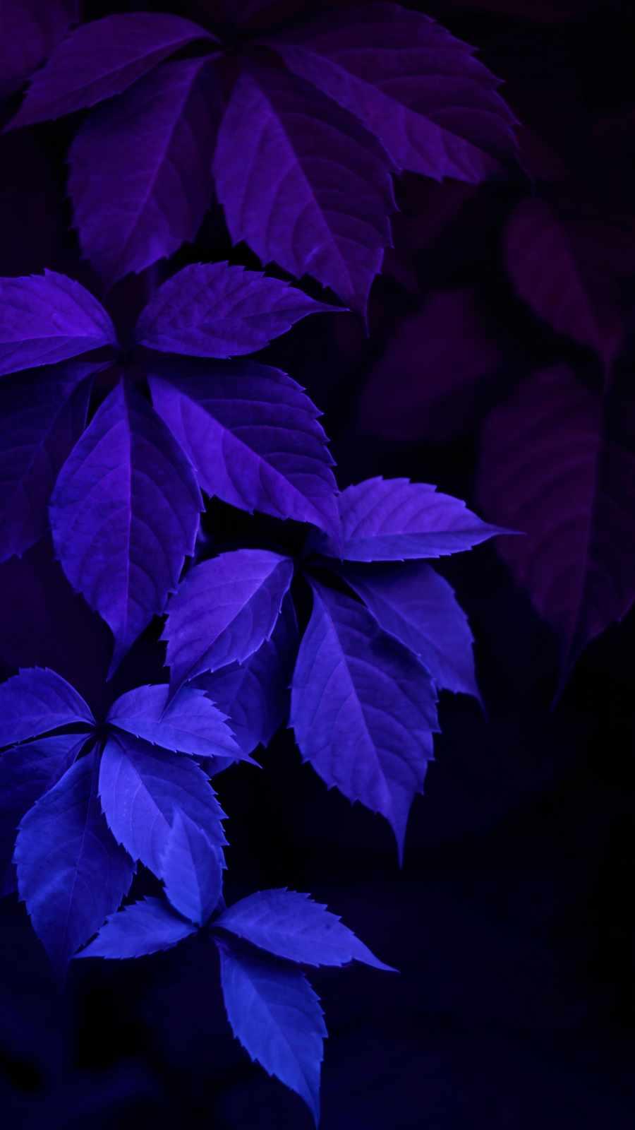 Blue Macro Foliage Nature