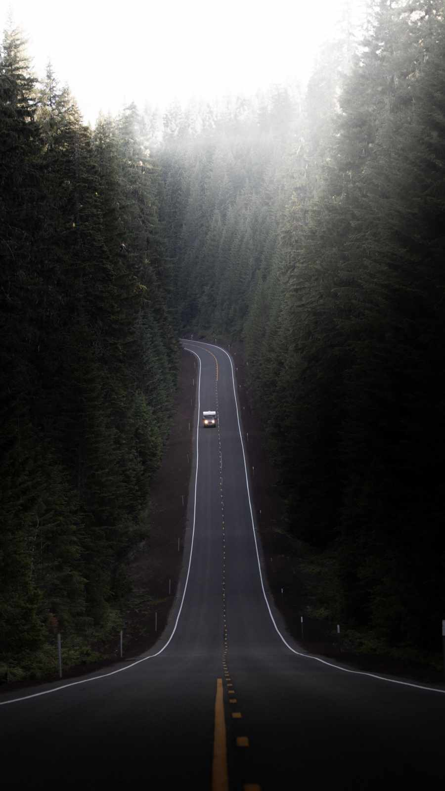 Forest Road Nature