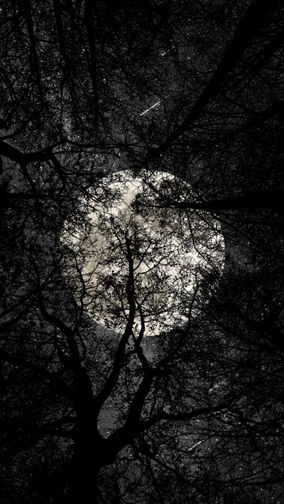 Full Moon from Forest