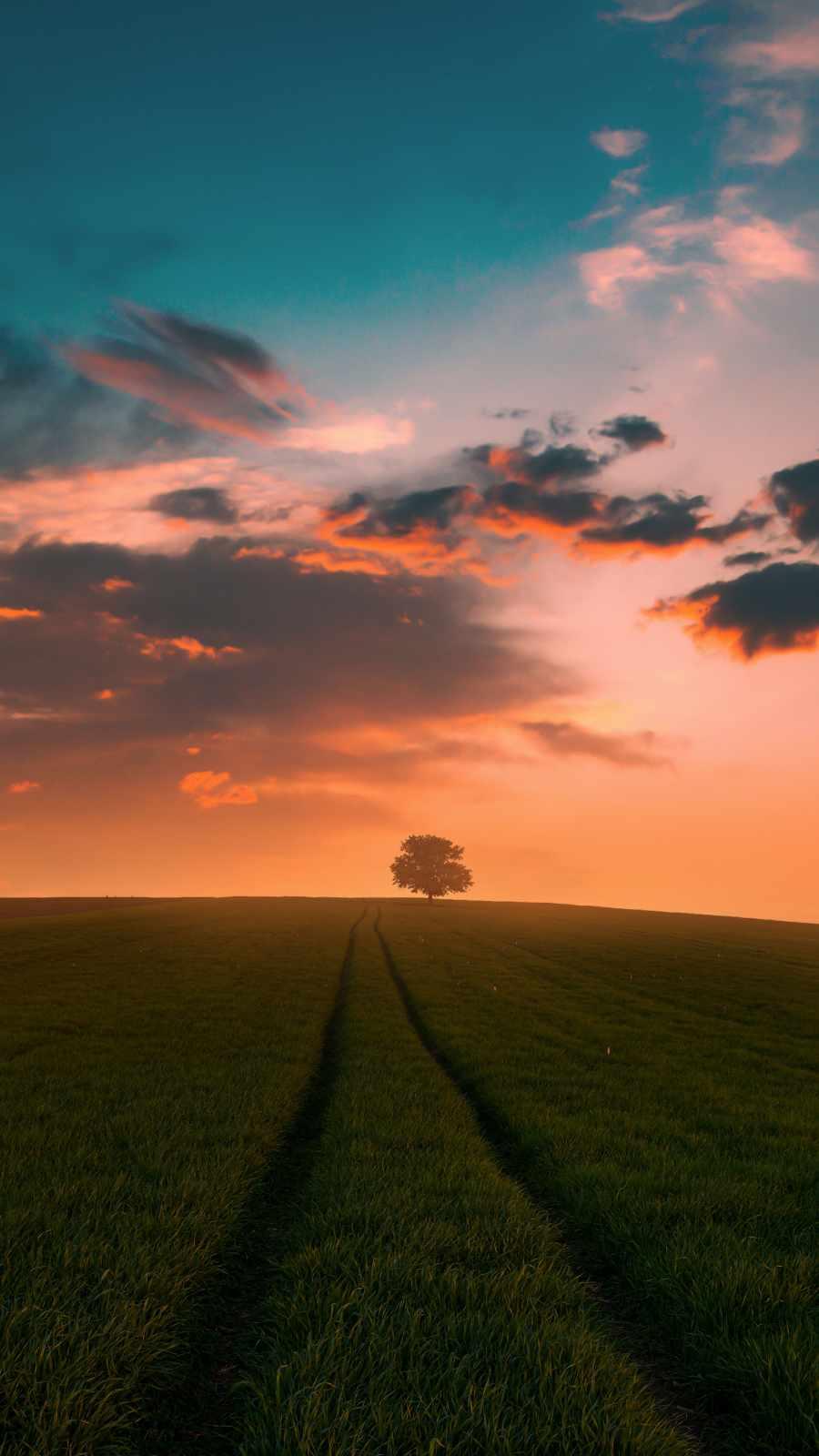 Grass Field Sunset