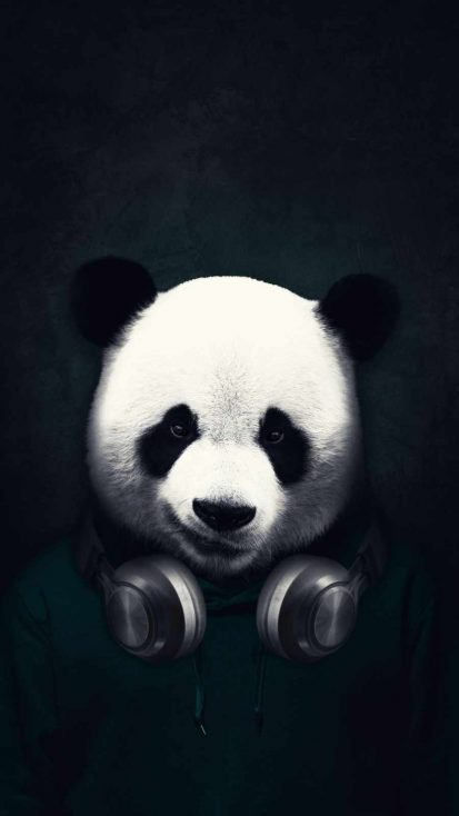 Music Panda iPhone Wallpaper