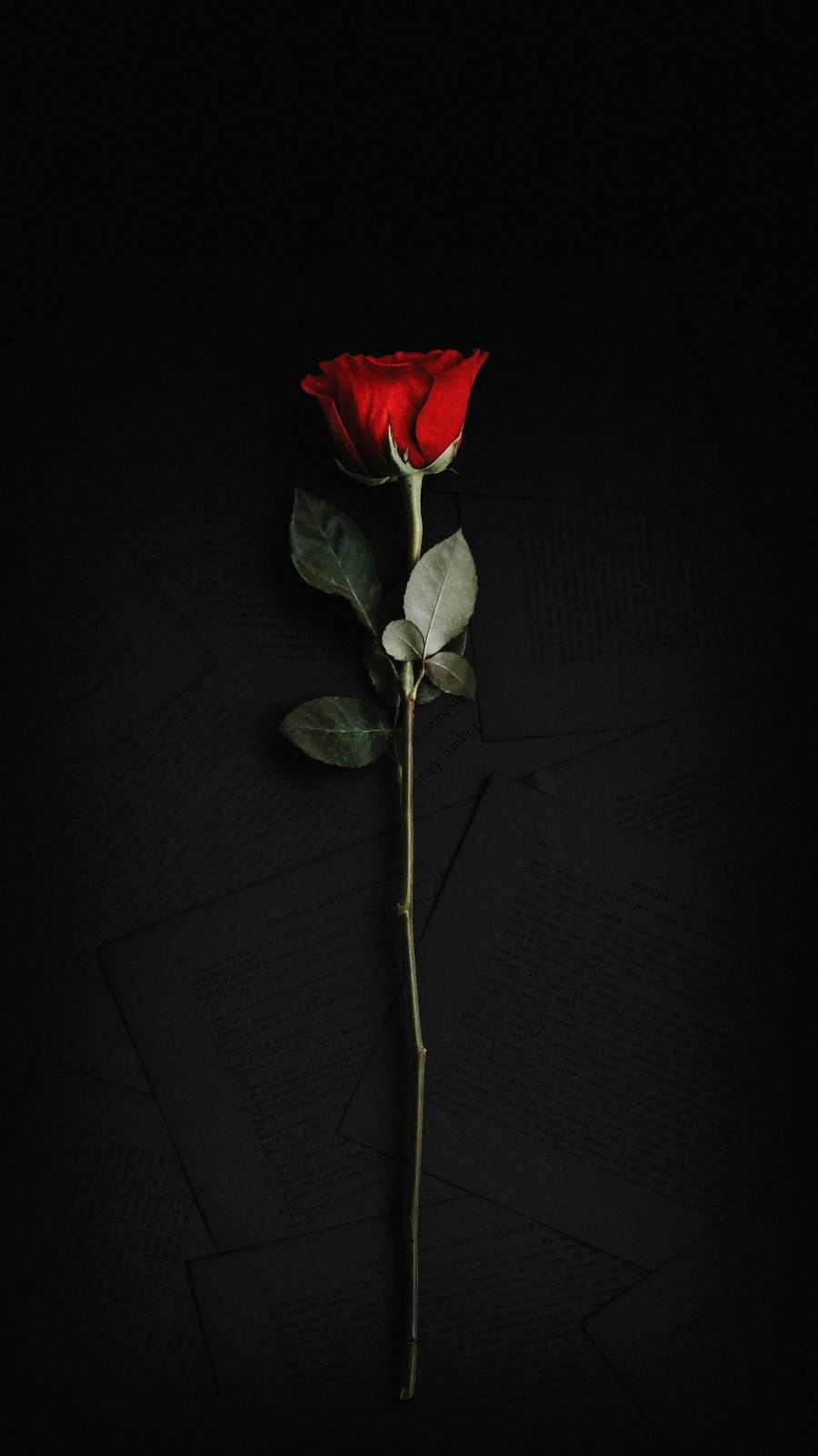 Rose in Dark iPhone Wallpaper
