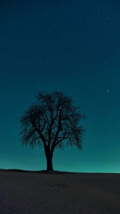 Alone Tree iPhone Wallpaper