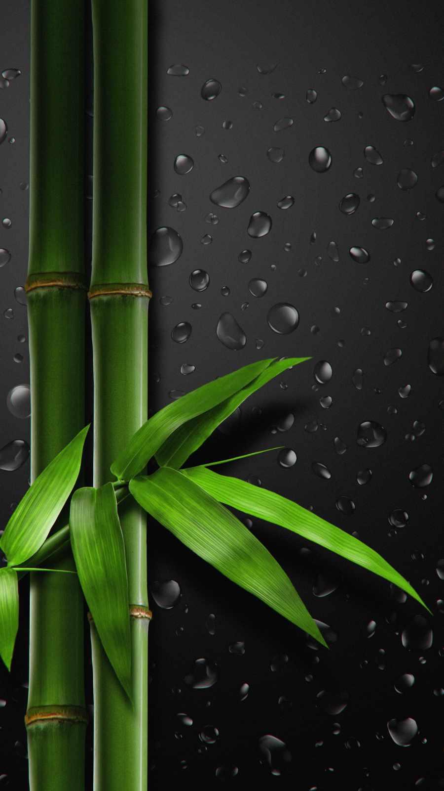 Bamboo Tree iPhone Wallpaper