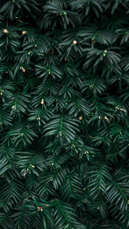 Green Plants Foliage Nature