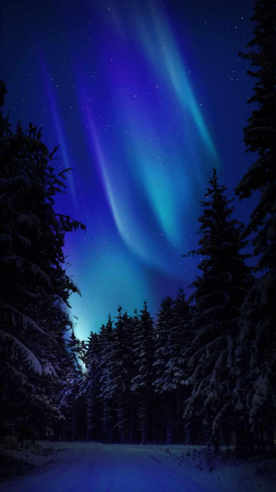 Northern Lights Snow Night