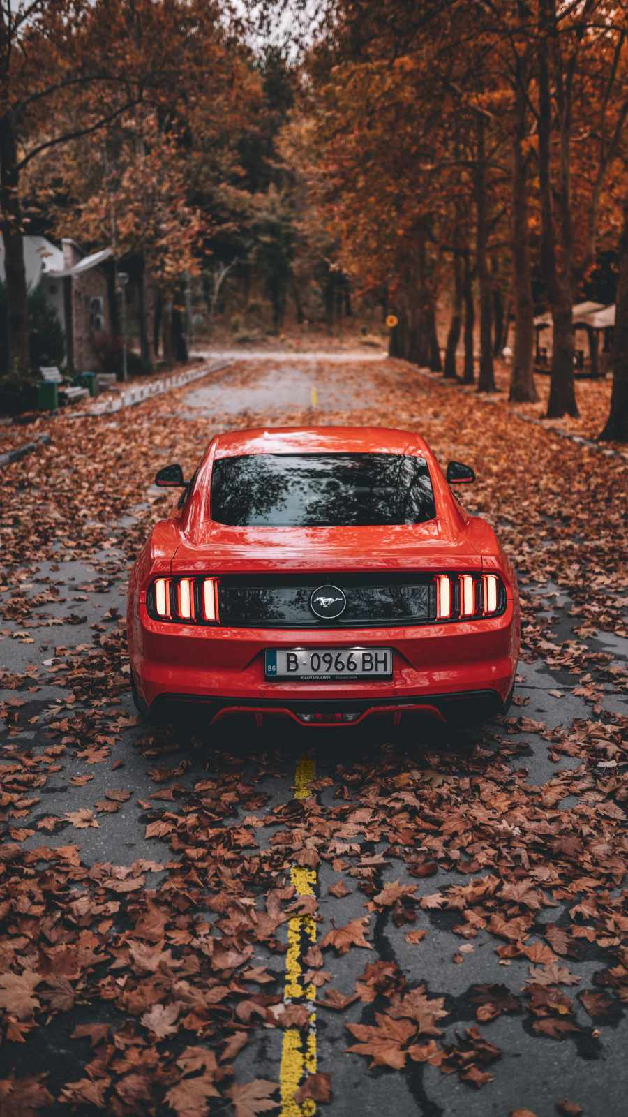 Red Mustang Autumn