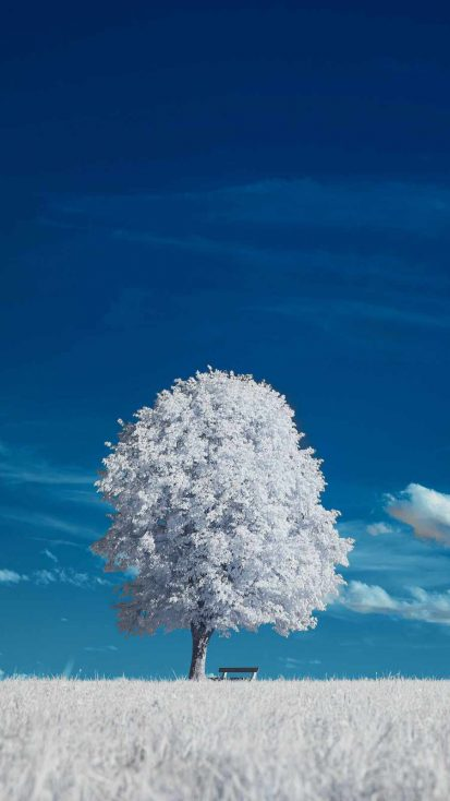 White Tree iPhone Wallpaper
