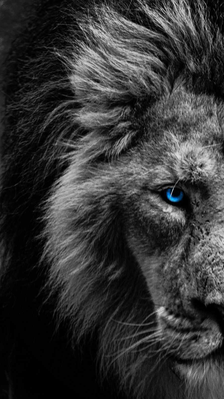 Blue Eye Lion iPhone Wallpaper