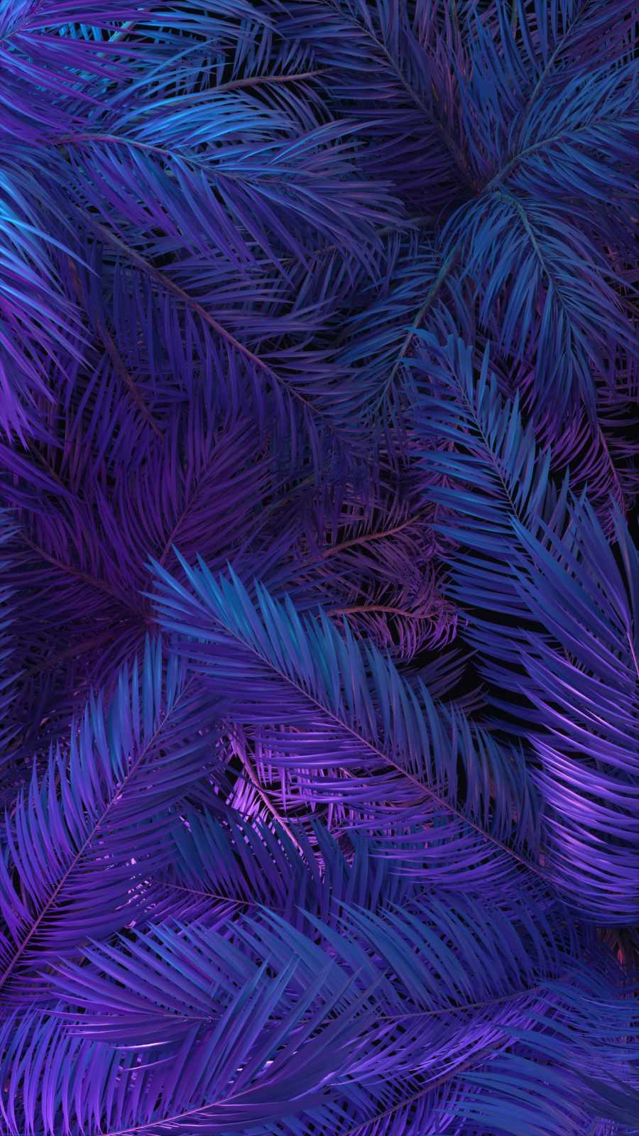 Dense Forest iPhone Wallpaper
