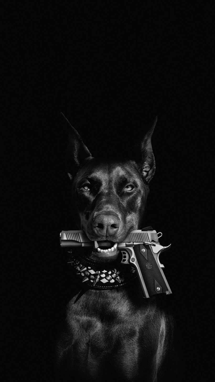 Dog with Gun iPhone Wallpaper