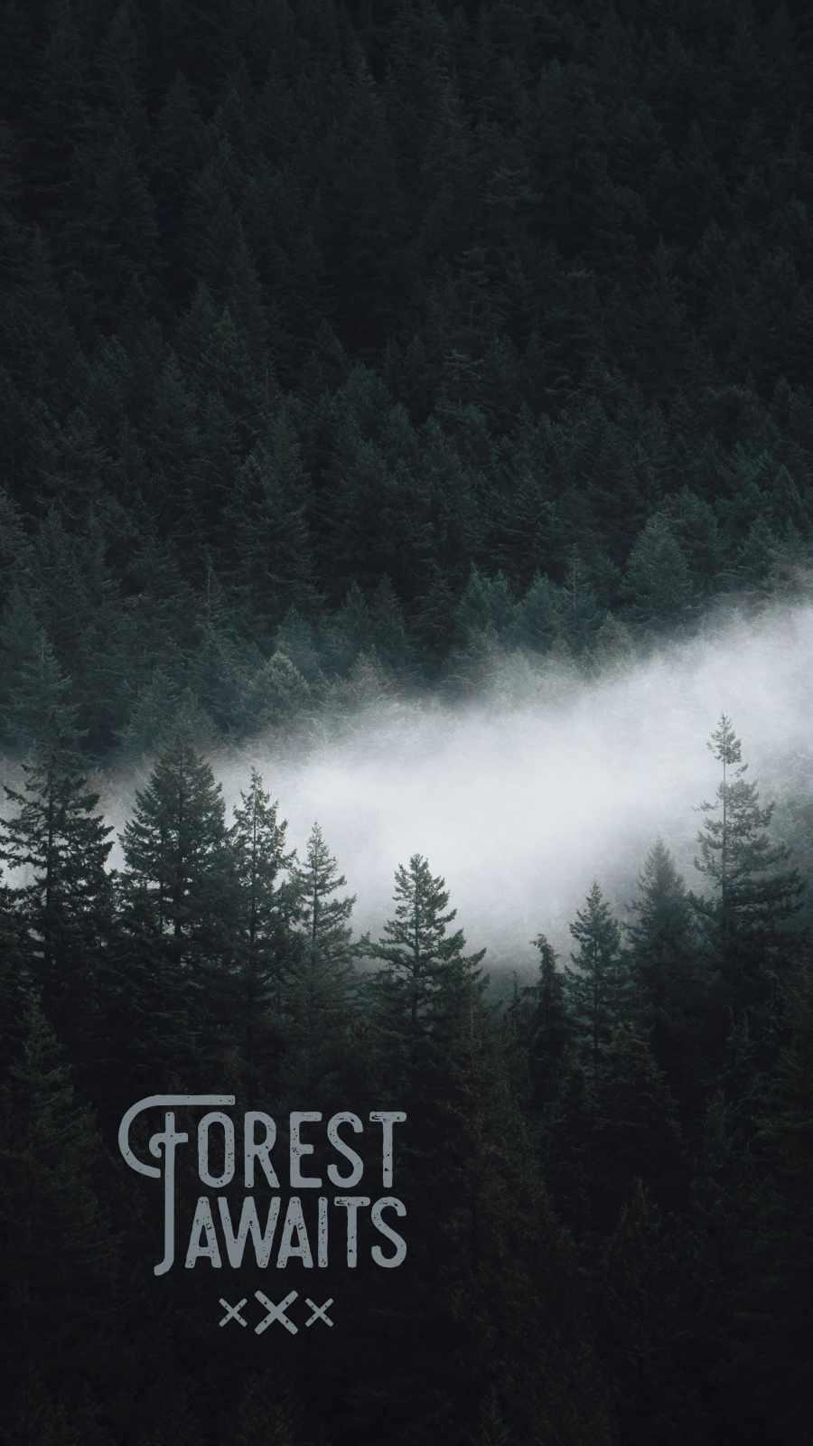 Forest Awaits iPhone Wallpaper