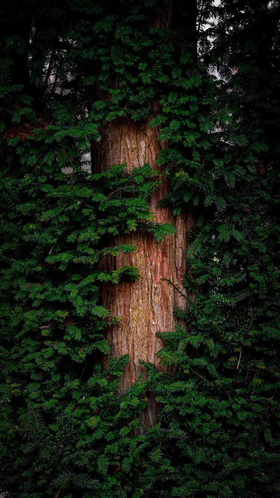 Huge Tree iPhone Wallpaper