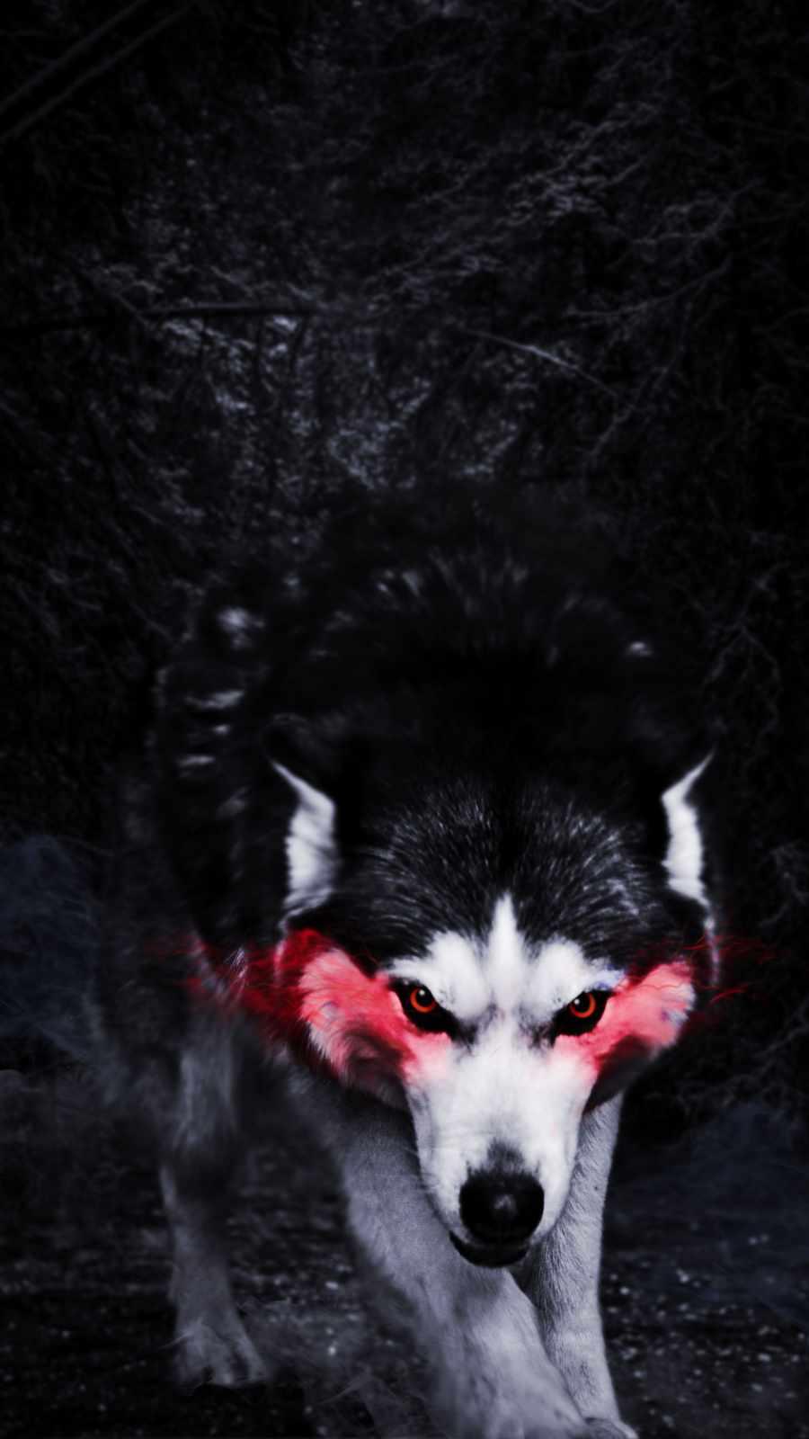 Angry Husky Dog