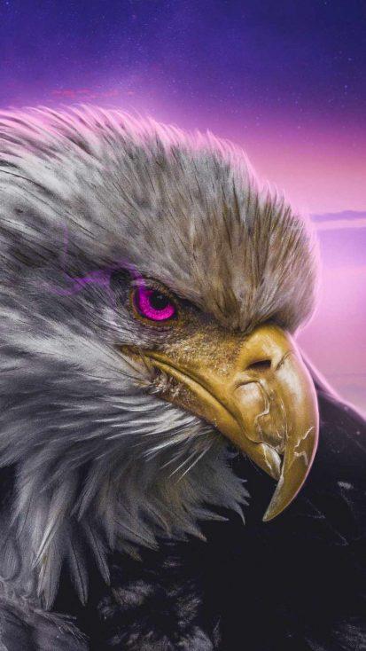 Golden Eagle Predator
