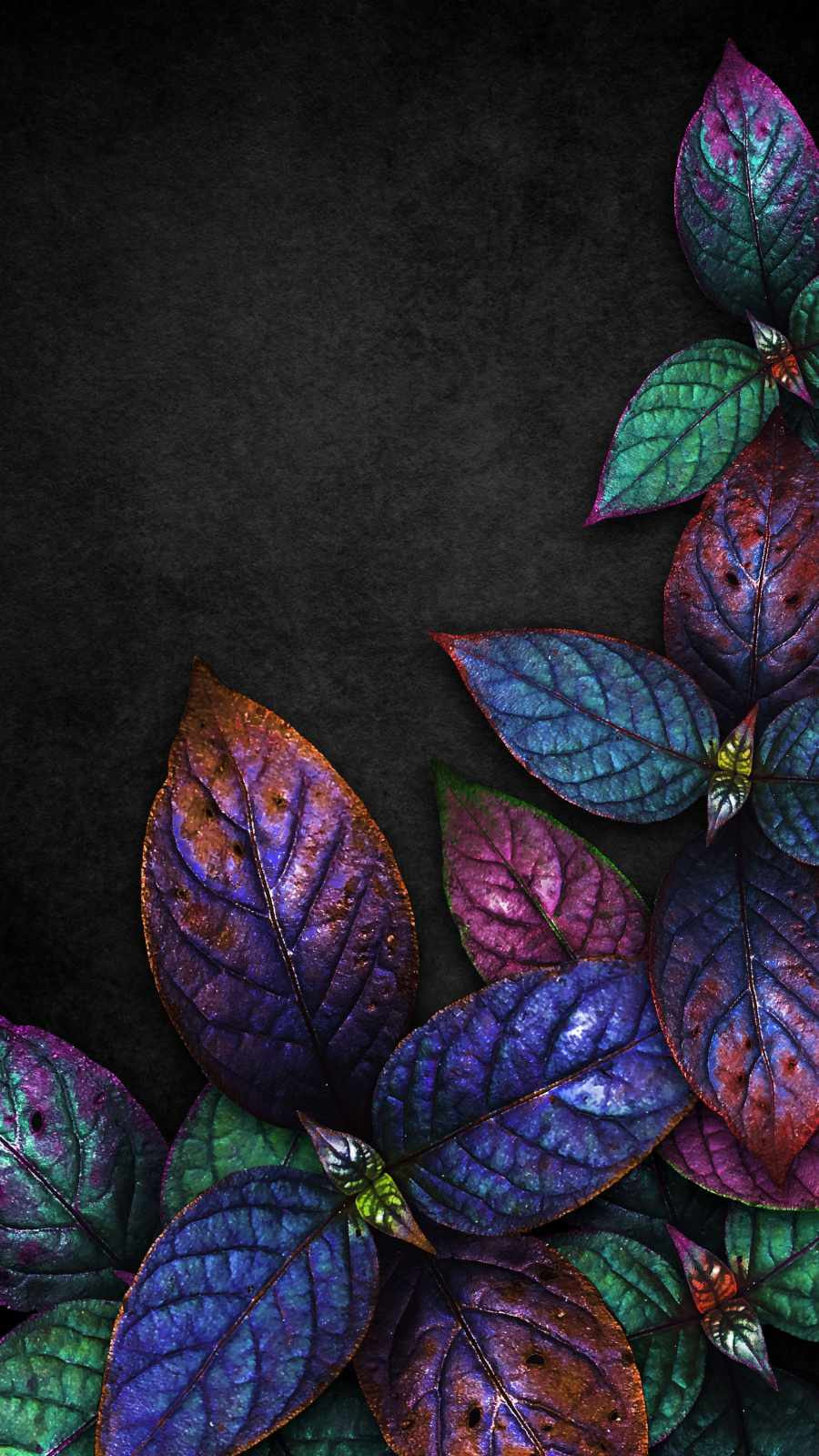 Colorful Foliage Nature
