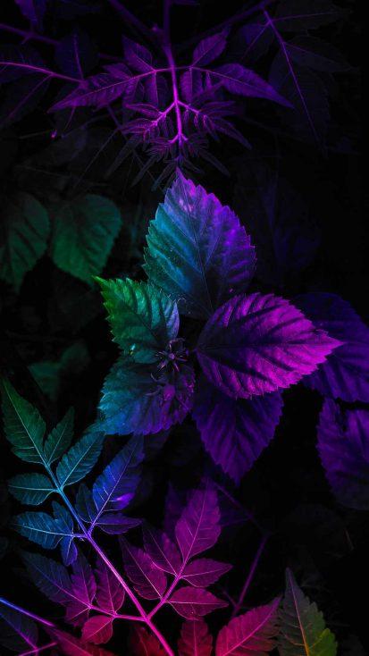 Nature Foliage Colors iPhone Wallpaper